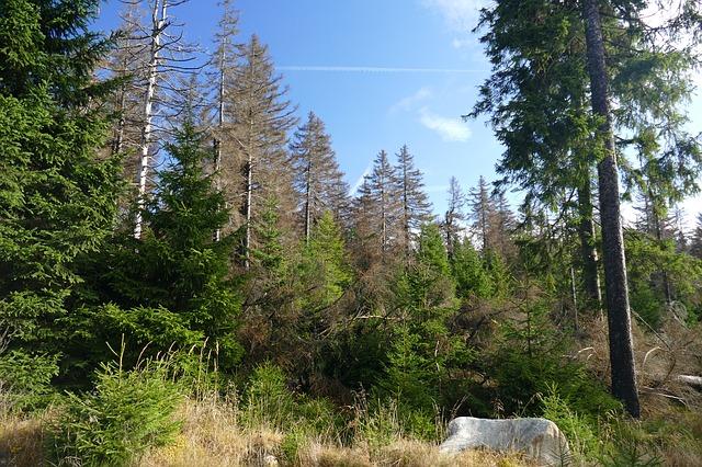 Waldsterben, Foto: Boke9a / Pixabay