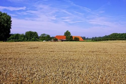 cornfield 621503 Foto-Rabe, pixabay