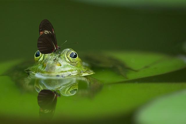 Foto: frog von Frank Winkler, pixabay